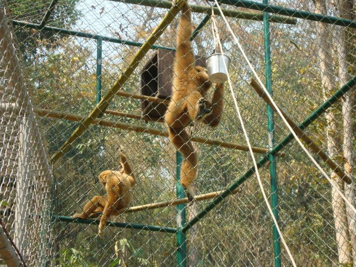 มูลนิธิเพื่อนสัตว์ป่า ขอเรียกร้องให้ตรวจ DNA สัตว์ที่ถูกยึดไป