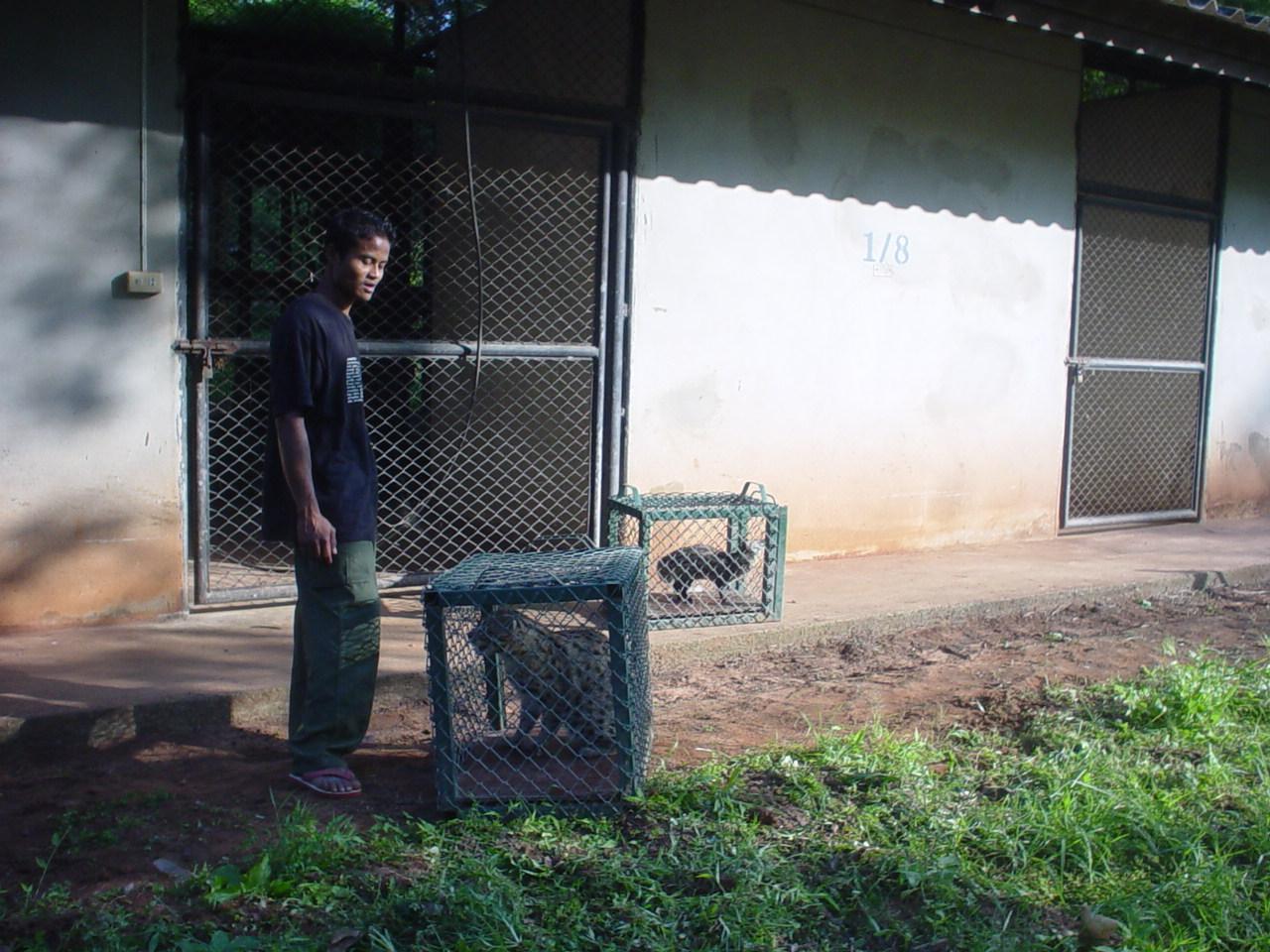 หนุ่มยืนรอเคลื่อนย้ายเสือปลาเข้าที่อยู่อาศัยใหม่ที่สถานีของกรมอุทยานฯ
