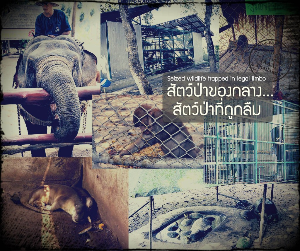 Seized wildlife story