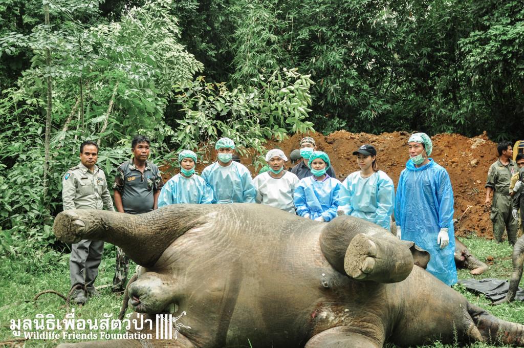 สัตวแพทย์และเจ้าหน้าที่กำลังผ่าพิสูจน์ซากช้างป่า ที่อุทยานแห่งชาติแก่งกระจาน