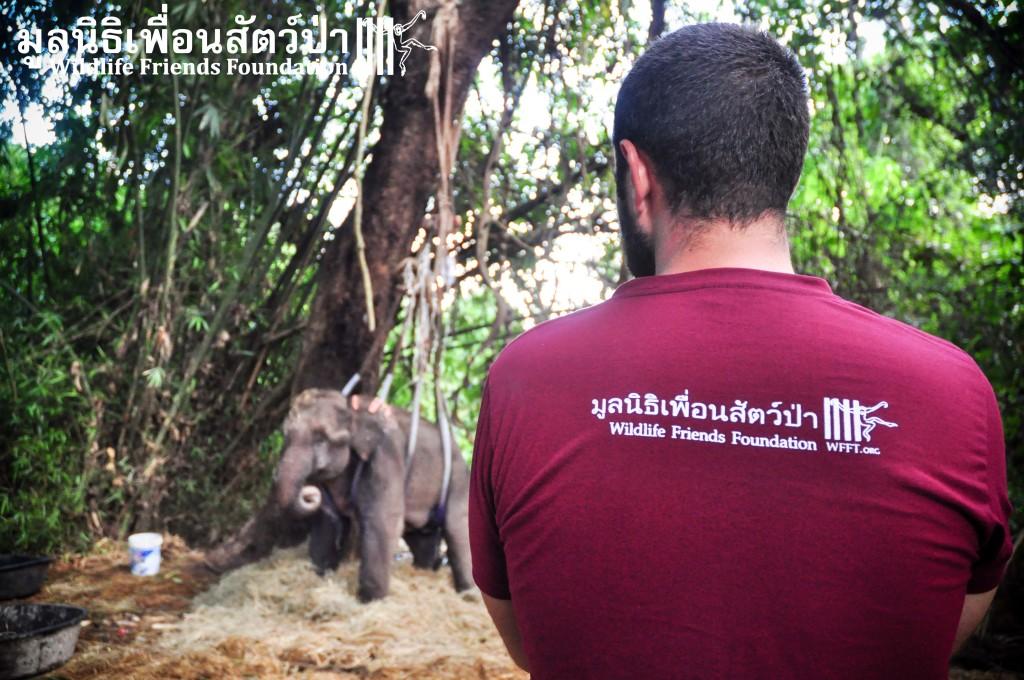 Elephant PaLaU NP 0333
