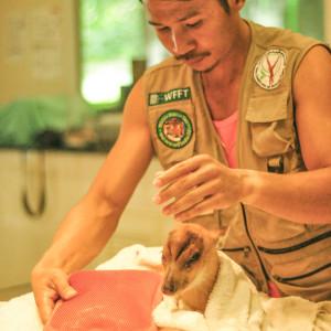 Muntjac Rescues 0167 07 31 15