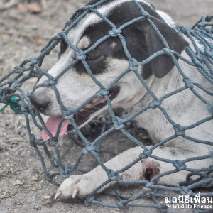 Mother Dog & Baby Rescue 153
