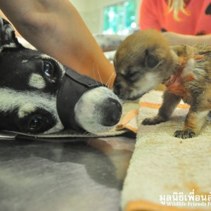Mother Dog & Baby Rescue 205