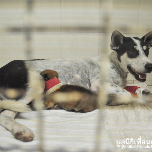 Mother Dog & Baby Rescue 222