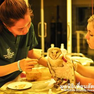 Barn Owl Rescue 120915 86
