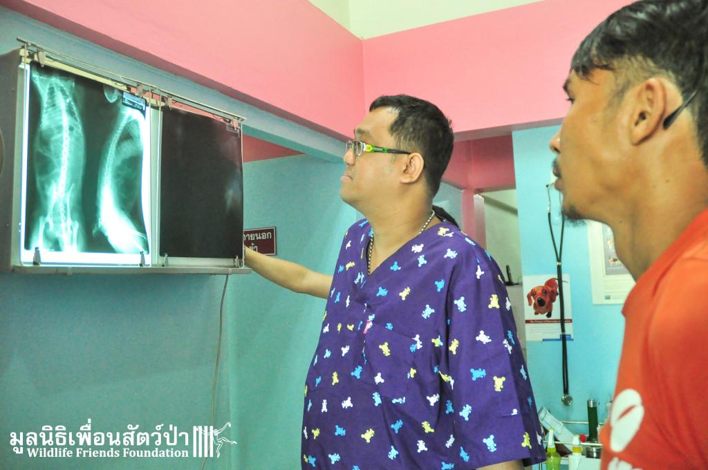Macaque rescue KaoWang_Tetanus 161015 841