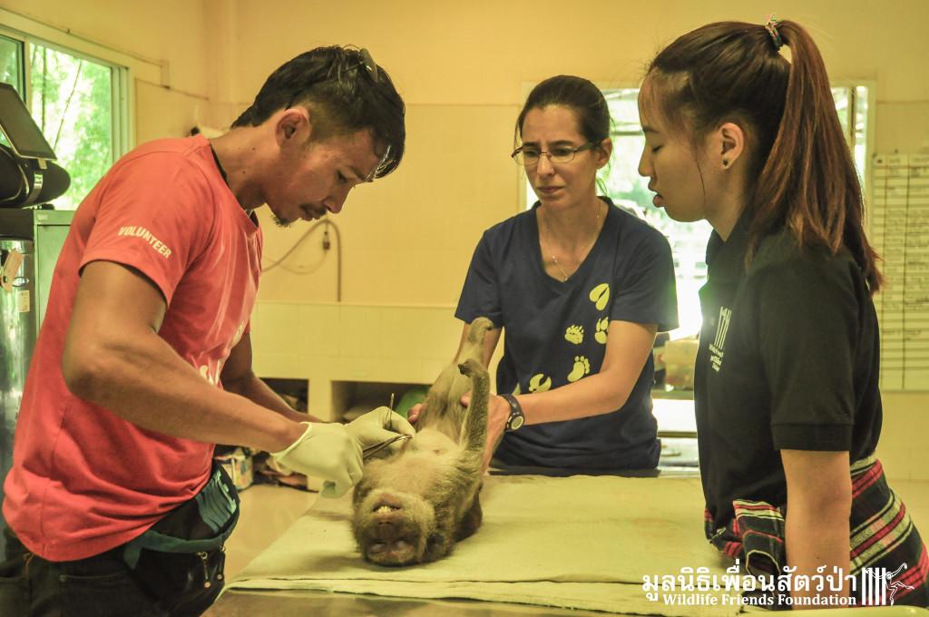 Macaque rescue KaoWang_Tetanus 161015 846