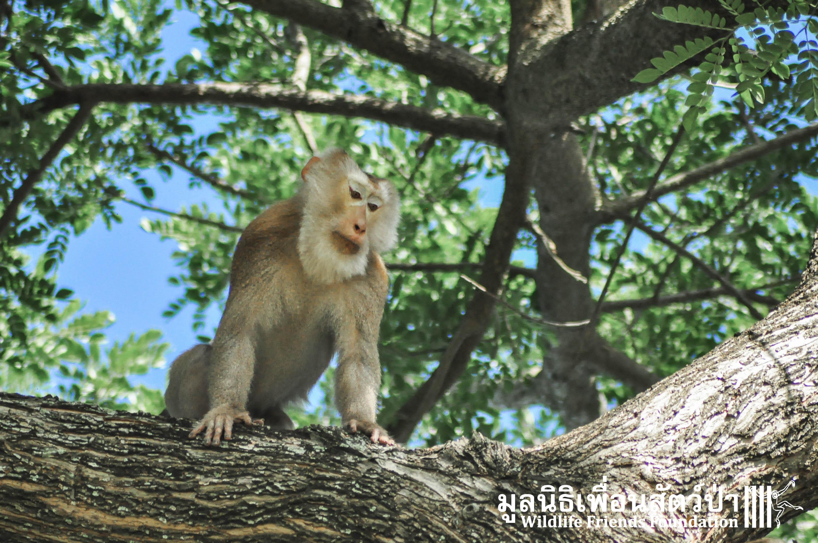 Macaque Rescue TaKoi 867