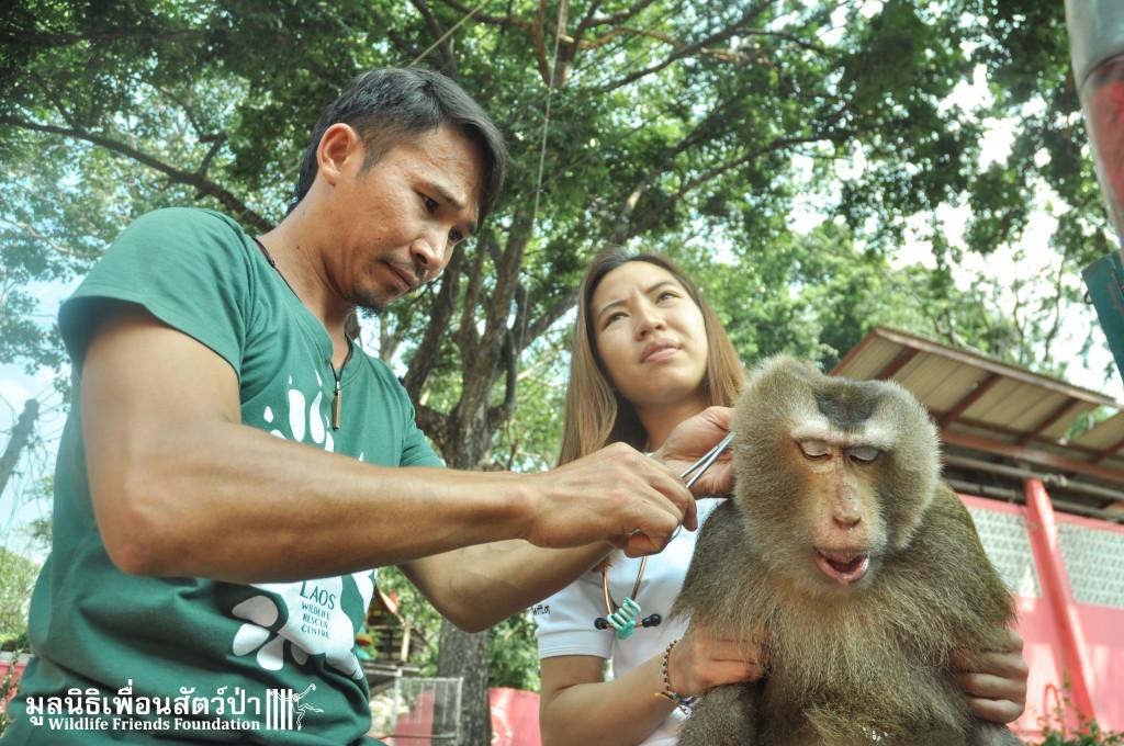 Macaque rescue Bird 301015 130