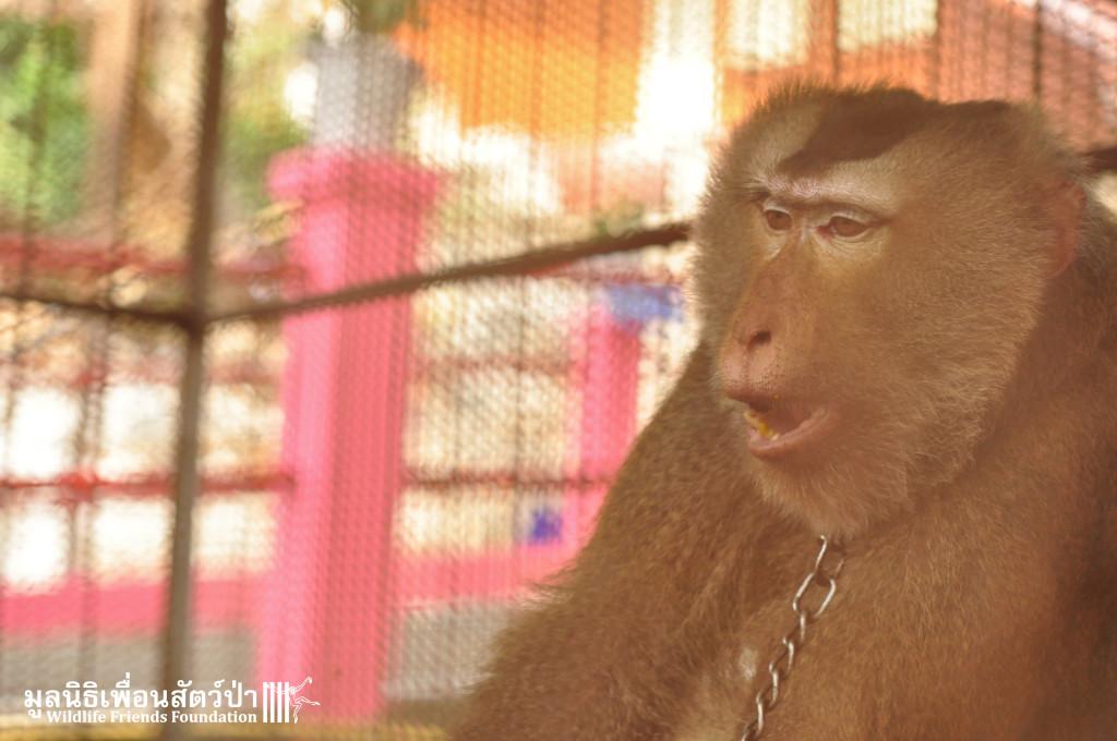 Macaque rescue Bird 301015 60