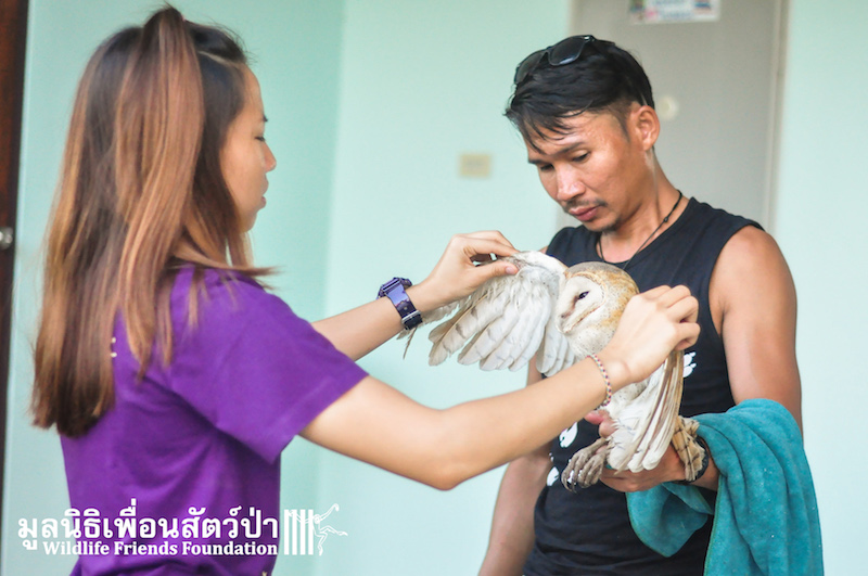 Barn owl rescue 091215 944