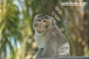 Macaque release KaoWang_hacked 081215 19
