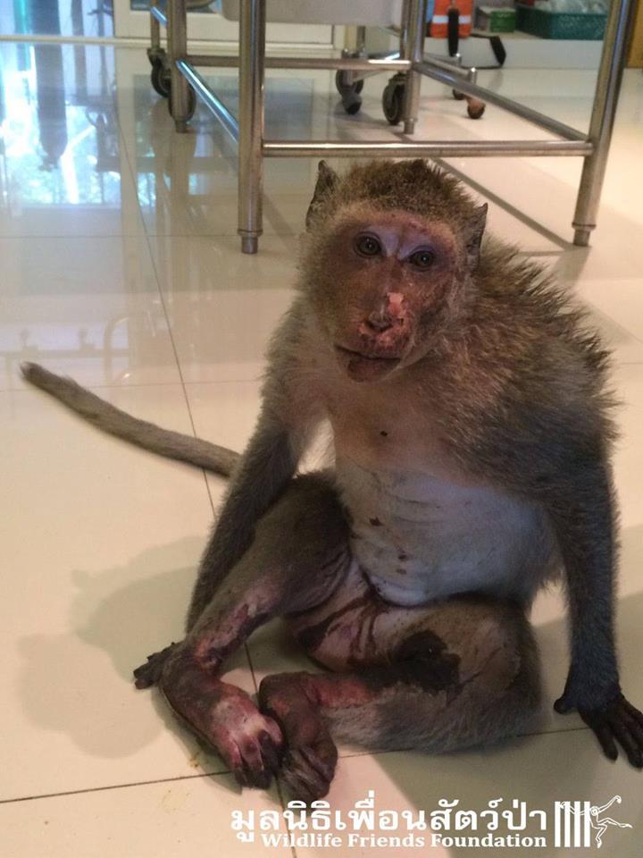 สปาร์กกี้เมื่อตอนบาดเจ็บและเข้ามารักษาตัวที่โรงพยาบาลสัตว์มูลนิธิเพื่อนสัตว์ป่า