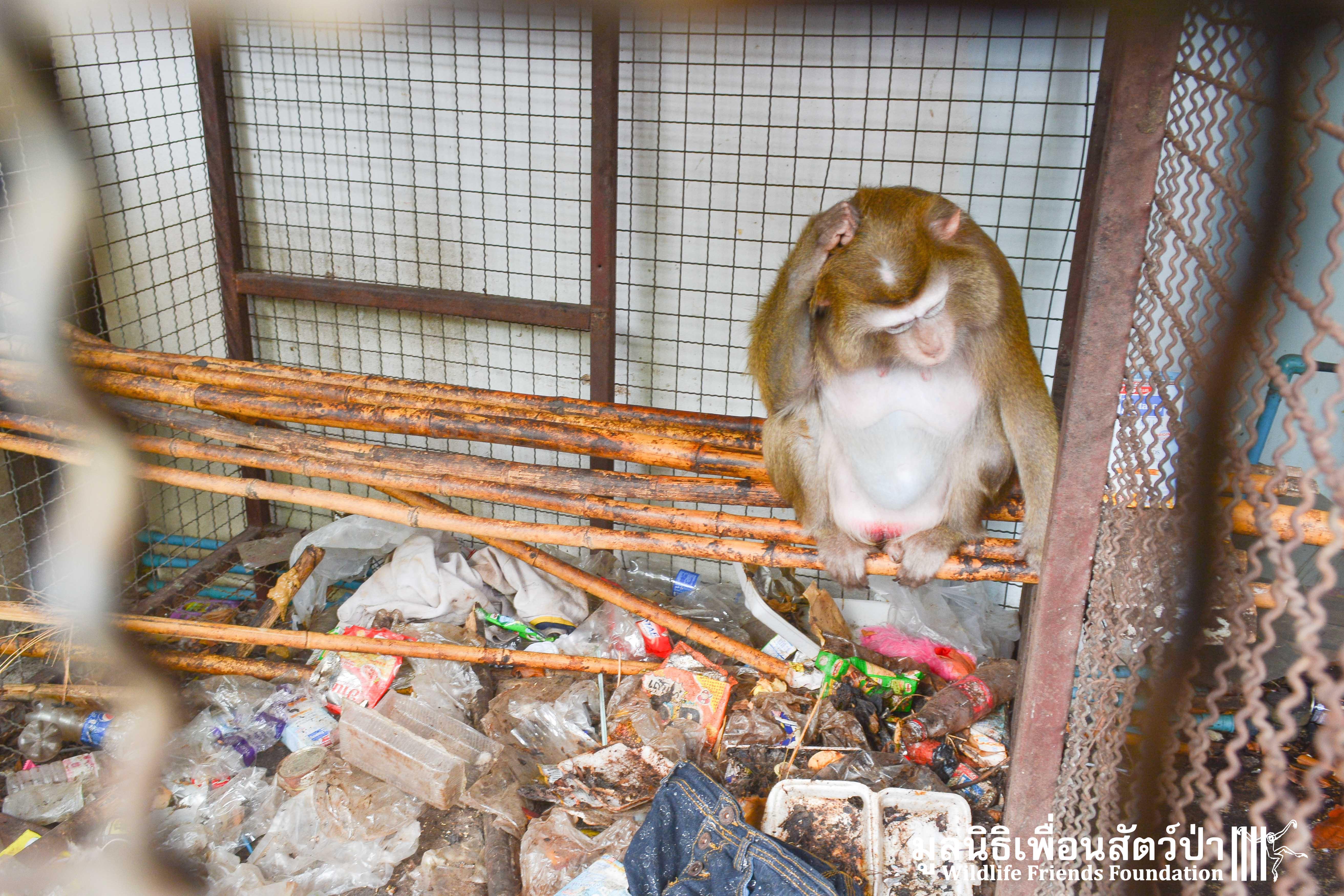 Macaque Rescue Yuy 100316 565
