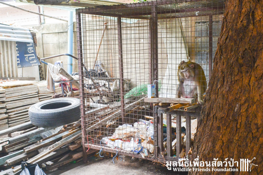 Macaque rescue Yuy 100316 583