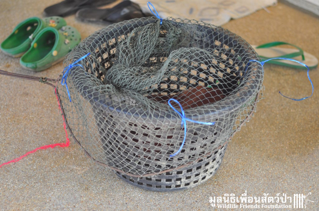 Brahminy Kite rescue 150416 01 sm