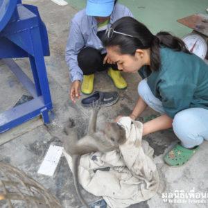 แม่ลิงตายทั้งกลมเพราะกระสุนฝังหัว
