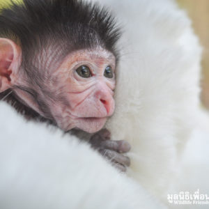 Macaque Rescue MaKut Baby Monkey 200416  26 Sm